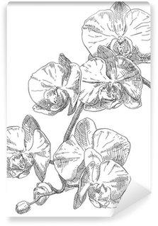Carta da Parati in Vinile Mano disegno del fiore dell'orchidea.