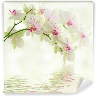 Carta da Parati in Vinile Orchidea bianca su uno sfondo chiaro