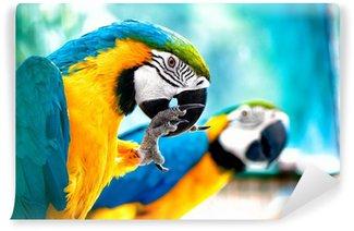 Carta da Parati in Vinile Pappagalli ara in natura con la giungla sfondo tropicale