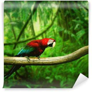 Carta da Parati in Vinile Parrot nella giungla