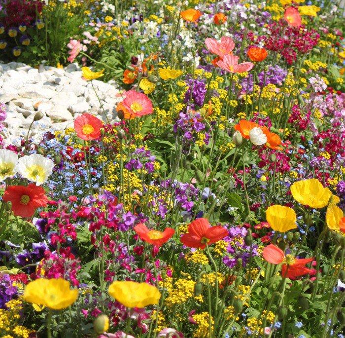 Carta da Parati in Vinile Prato di fiori con papaveri colorati ...