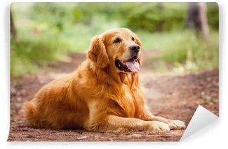 Carta da Parati in Vinile Ritratto di un cane