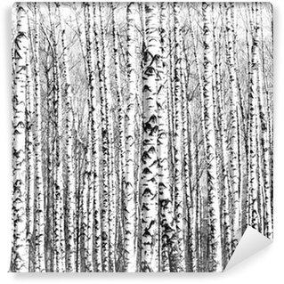Carta da Parati in Vinile Tronchi di primavera di betulle in bianco e nero