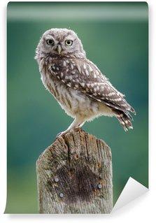 Carta da Parati in Vinile UK selvatico Civetta