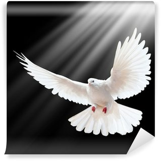 Carta da Parati in Vinile Un volo libero colomba bianca isolato su un nero