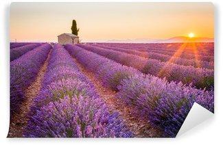 Carta da Parati in Vinile Valensole, Provenza, Francia. Campo di lavanda pieno di fiori viola