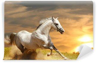 Carta da Parati in Vinile White Stallion