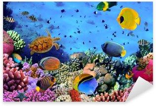 Çıkartması Bir mercan kolonisinin Fotoğraf