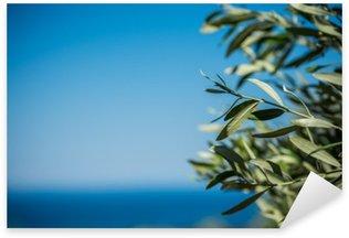 Çıkartması Genç yeşil zeytin dalları asmak