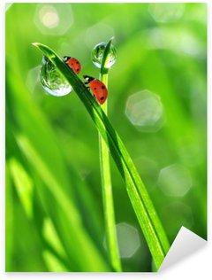 Çıkartması Pixerstick Taze sabah çiy ve ladybirds