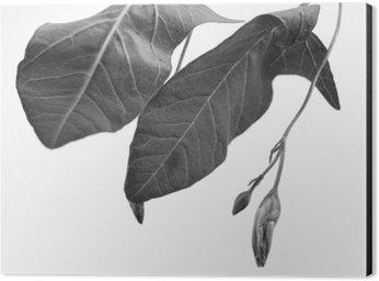 Cuadro en Dibond Macrophoto blanco y negro del objeto planta con profundidad de campo