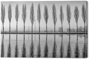 Cuadro en Lienzo Alberi riflessi sul lago all'alba en bianco e nero