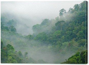 Cuadro en Lienzo Bosque niebla de la mañana
