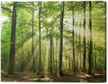 Cuadro en Lienzo Bosque