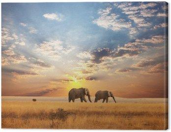 Cuadro en Lienzo Elefante