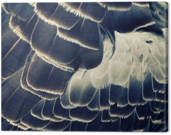 Cuadro en Lienzo Fondo del plumaje de las aves