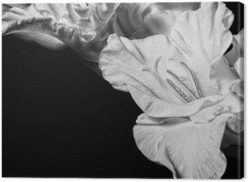 Cuadro en Lienzo Gladiolo blanco y negro