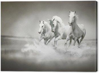 Cuadro en Lienzo La manada de caballos blancos corriendo a través del agua