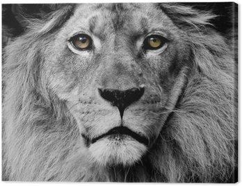 Cuadro en Lienzo León de ojos