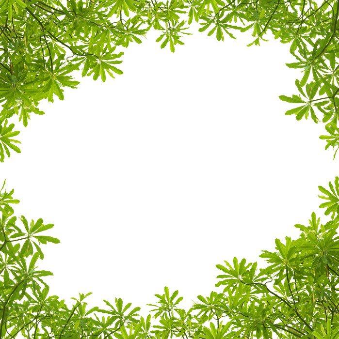 Cuadro en lienzo marco de hojas verdes sobre fondo blanco - Marcos para plantas ...