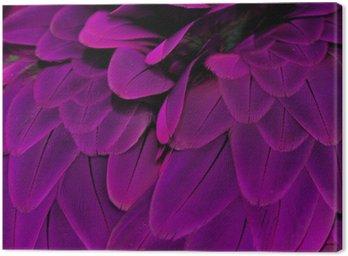 Cuadro en Lienzo Plumas; Púrpura