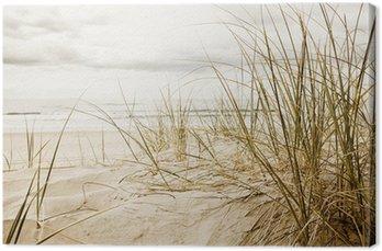 Cuadro en Lienzo Primer plano de una hierba alta en una playa durante la temporada nublado
