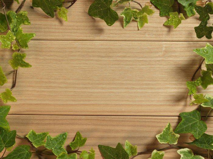 Cuadro en Lienzo Una planta de hiedra sobre una mesa de madera dura - Casa y jardín