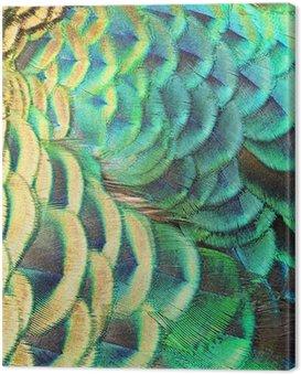 Cuadro en Lienzo Verdes plumas de pavo real