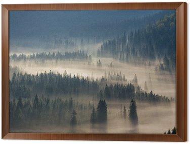 Cuadro Enmarcado Abetos en un prado por la voluntad de los bosques de coníferas en las montañas de niebla