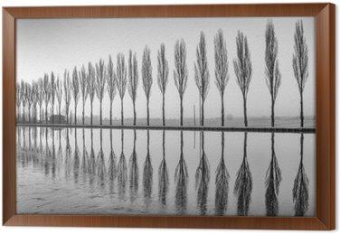 Cuadro Enmarcado Alberi riflessi sul lago all'alba en bianco e nero