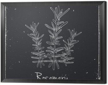 Cuadro Enmarcado Romero hierbas y especias.