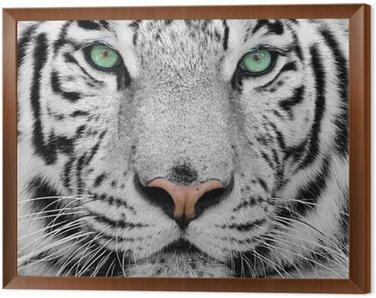 Cuadro Enmarcado White tiger