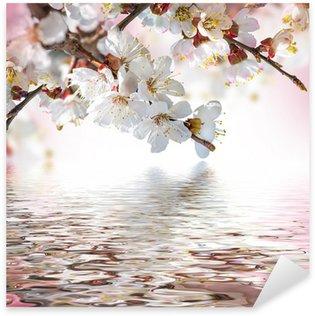 Pixerstick till Allt Apricot blommor på våren, blommor bakgrund