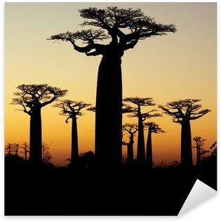 Pixerstick till Allt Baobab solnedgång silhuett