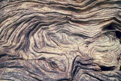 Pixerstick till Allt Bark Tree trästruktur