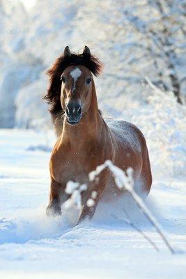 Pixerstick till Allt Bay häst som körs på vintern