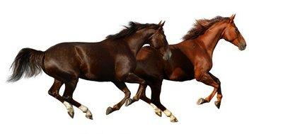 Pixerstick till Allt Budenny hästar galopp - isolerad på vitt