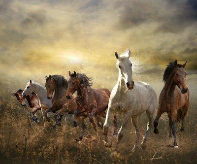 Pixerstick till Allt Flock hästar galopperar fritt vid solnedgången