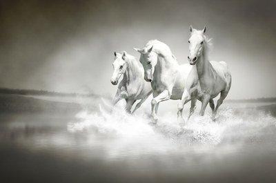 Pixerstick till Allt Flock vita hästar som löper genom vatten