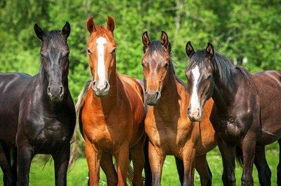 Pixerstick till Allt Grupp unga hästar på bete