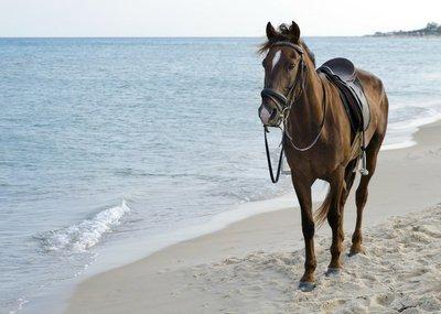 Pixerstick till Allt Häst på stranden