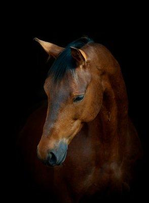 Pixerstick till Allt Häst på svart