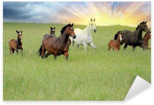 Pixerstick till Allt Häst