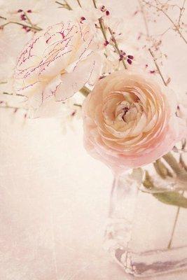 Pixerstick till Allt Ranunculus blommor
