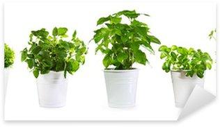 Pixerstick till Allt Set av krukväxter gröna växter