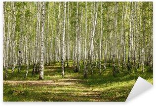 Pixerstick till Allt Sommar grön björkskog