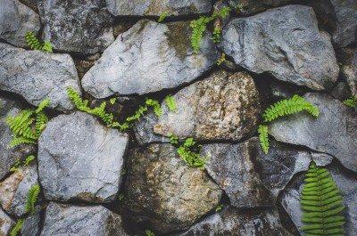 Pixerstick till Allt Stenmur med natur växt
