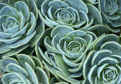 Pixerstick till Allt Suckulent växt