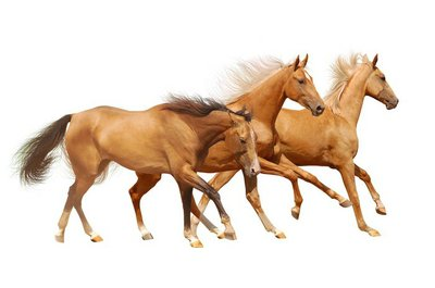 Pixerstick till Allt Tre hästar på vit