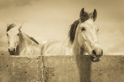 Pixerstick till Allt Två vita hästar